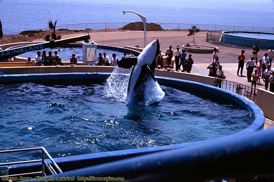 Keane's Picture Web Site - Theme Parks - Marineland of the ...
